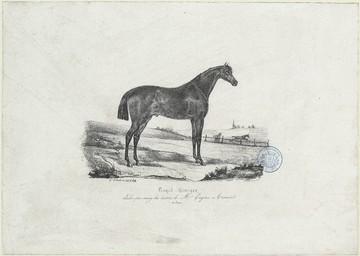 Royal - Georges, étalon-pur-sang des écuries de Mr. Eugène Aumont (de Caen)   Le Couteulx, Gustave (18..-18..)