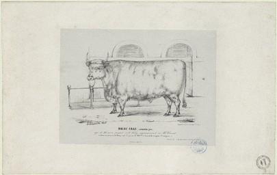 Boeuf Gras (cotentin pur) âgé de 36 mois, pesant 778 kilog, appartenant à Mr. Cornet, a obtenu au concours de Poissy une 1ere prime de 800 F. et la médaille d'argent (3e catégorie) | Le Couteulx, Gustave (18..-18..)