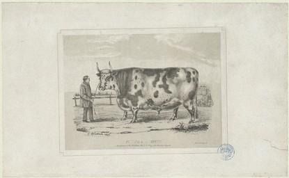 Boeuf Gras de race Cotentine, appartenant à Mr Adeline, maire de Blay, près Bayeux (Calvados) | Le Couteulx, Gustave (18..-18..)