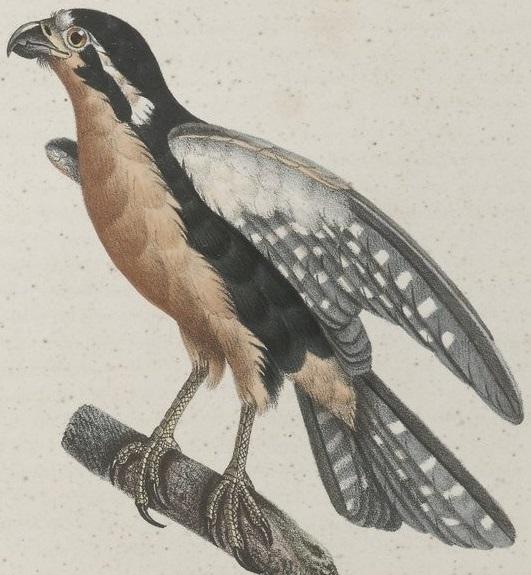 Sans Réserve - Les Oiseaux |