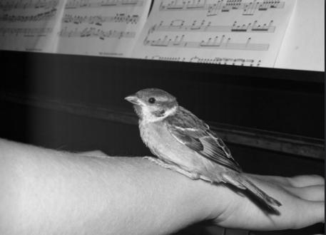 Le chant des oiseaux par l'ensemble Opus 14 |